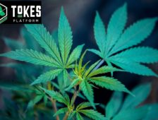 What is Tokes (TKS), Blockchain Solutions for the Cannabis Industry